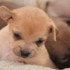 LP: Puppies